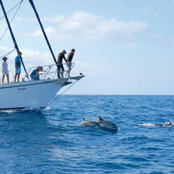 Auf Delfin-Safari