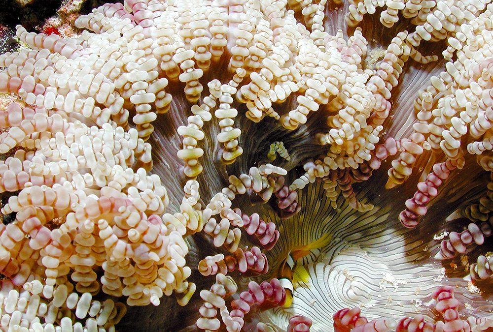 Blumen des Meeres